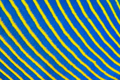 Blue yellow diagonal fish stripes. Close up abstract pattern of the blue and yellow stripes on the side of an Emperor angelfish Pomacanthus imperator in the Red royalty free stock images