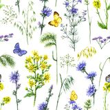 Blue and Yellow Field Flowers Pattern. Hand drawn floral seamless pattern made with watercolor blue and yellow wildflowers and butterflies. Summer flowers Royalty Free Stock Image