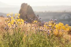 Landscape with flowers in summer. Stock Photography
