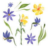 Blue and yellow flowers Royalty Free Stock Images