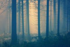 Blue yellow foggy forest fairytale stock photos