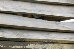 Blue and yellow macaw, hiding. In a nest box. wood detail Royalty Free Stock Photography