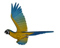 Blue and yellow macaw, parrot, flying - 3D render Royalty Free Stock Photos