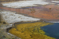 Blue, yellow and orange water of hot springs, Yellowstone, Wyomi Royalty Free Stock Photo