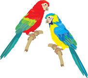 Blue Yellow and Red Blue Macaw parrots Stock Images