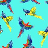 Blue and yellow and Scarlet macaw flying, seamless pattern design stock illustration