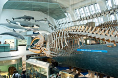 Blue zone of  Natural History Museum Royalty Free Stock Photography