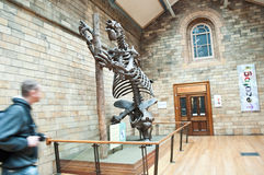 Blue zone of Natural History Museum Royalty Free Stock Photos