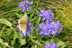 bluebasin瓷花 库存图片