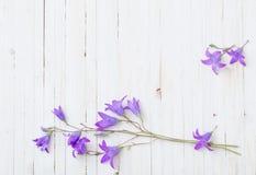 Bluebel flowers om  wooden background Stock Image