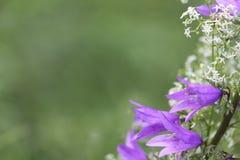 bluebell καλοκαίρι λιβαδιών λο Στοκ φωτογραφία με δικαίωμα ελεύθερης χρήσης