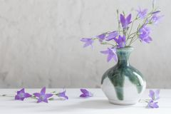 Bluebell στο βάζο στο άσπρο υπόβαθρο Στοκ Εικόνες