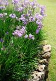 Bluebell цветет Flowerbed Стоковые Фотографии RF