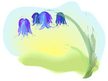 Bluebell. A picture of blue flower - bluebell Royalty Free Illustration