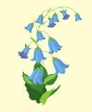 Bluebell Стоковое фото RF