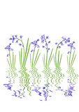 bluebell abstrakcjonistyczny kwiat Zdjęcia Royalty Free