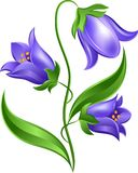Bluebell. S on white background. Sketch Stock Photo