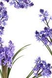 Bluebell-Blumen-Rand lizenzfreie stockbilder