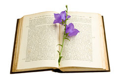 Bluebell Bookmark Royalty Free Stock Photography