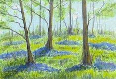 Bluebell drewna w wiośnie Obrazy Stock
