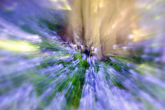 Bluebell drewno - Abstrakcjonistyczny Zbliża tło Zdjęcia Stock
