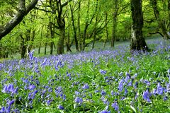 Bluebell Fantasy Land Royalty Free Stock Photos