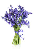 Bluebell Flower Posy. Over white background Royalty Free Stock Photos