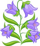Bluebell-3 Royalty Free Stock Photos