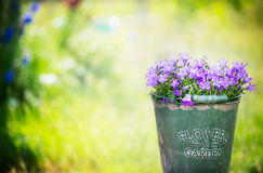 Bluebell flowers bunch in old bucket on green garden background Royalty Free Stock Photography