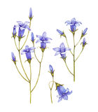 Bluebell flowers collection vector illustration