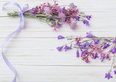 Bluebell flowers om white  background Stock Images