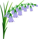 Bluebell flowers. Stock Photos