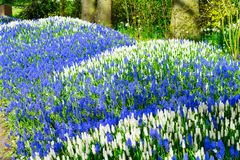 Bluebell flowers river Royalty Free Stock Photo