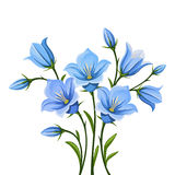 Bluebell flowers. Vector illustration. Royalty Free Stock Photo