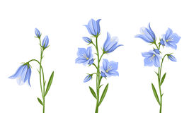 Bluebell flowers. Vector illustration. Royalty Free Stock Image