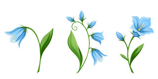 Bluebell flowers. Vector illustration. Royalty Free Stock Photos