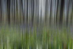 Bluebell Forest abstract Stock Photography
