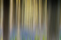Bluebell Forest abstract Stock Photos
