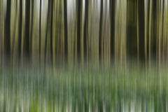 Bluebell Forest abstract Royalty Free Stock Photography