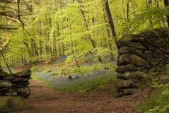 Bluebell Forest Pathway Immagine Stock Libera da Diritti
