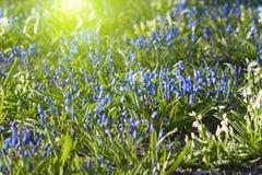Bluebell glade Stock Photos