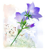 Bluebell. Royalty Free Stock Photos