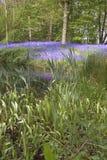 bluebell jeziora Obrazy Royalty Free