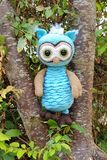 Bluebell the owl royalty free stock image