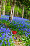 Bluebell phone Stock Photography