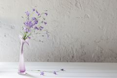 Bluebell in vase on white background Royalty Free Stock Image