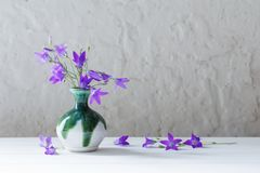 Bluebell in vase on white background Royalty Free Stock Photography