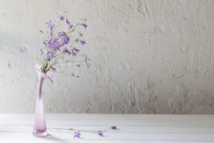 Bluebell in vaso su fondo bianco Immagine Stock Libera da Diritti