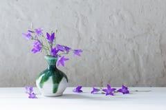 Bluebell in vaso su fondo bianco Fotografia Stock Libera da Diritti