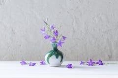 Bluebell in wase su fondo bianco Fotografia Stock Libera da Diritti